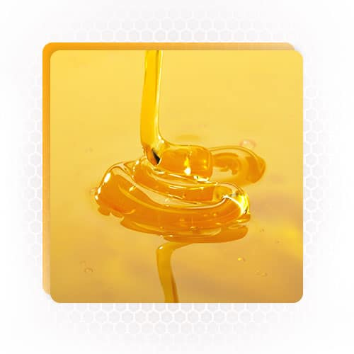 quality honey product in india