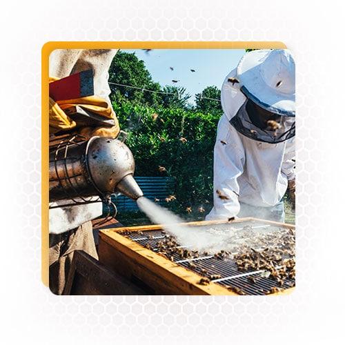 honey harvesting equipment