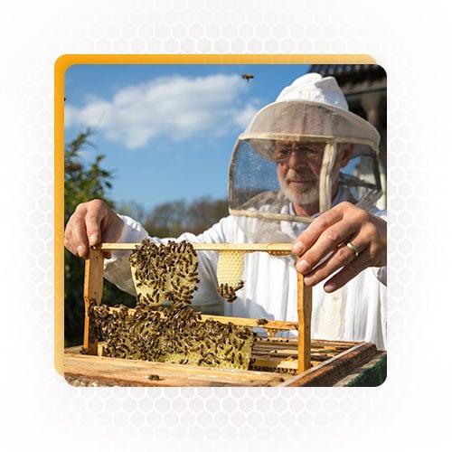 beekeeping equipment supplies