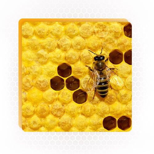 Bee Multiplication