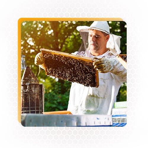 Apiary honey